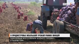 В Приднестровье небольшой урожай ранних овощей
