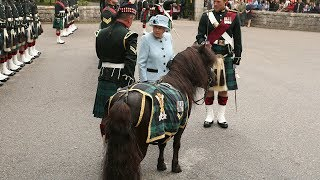 Queen reunited with cheeky Shetland pony who nibbled on her flowers