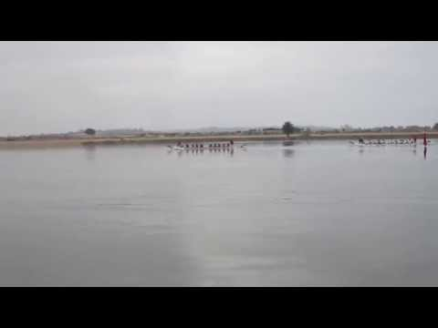 Dragon Boat Races, San Diego---A Winning Performance