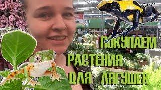 Покупаем растения для террариума с лягушками!