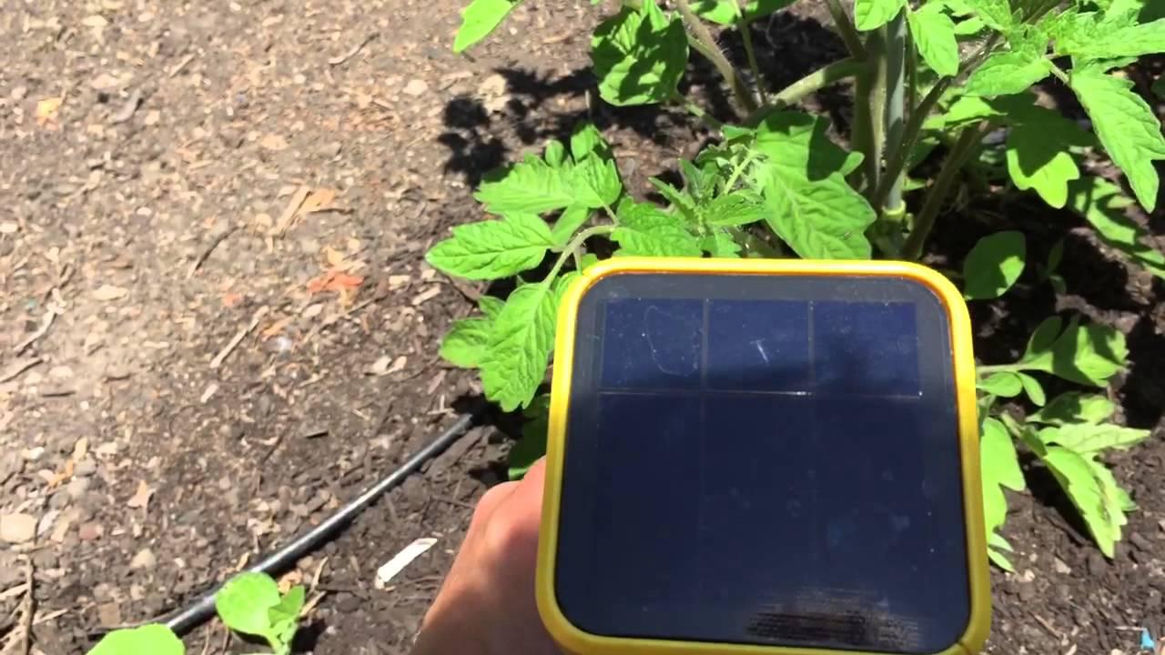edyn garden sensor review - Edyn Garden Sensor