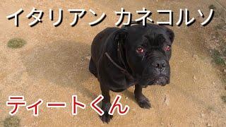 新チャンネルよろしくお願いします! 【Dog Rescue A&Rの素顔】 https:/...