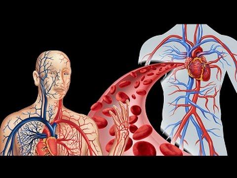 Image result for रक्ताभिसरण