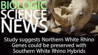 Science News - Study suggests N. White Rhino Genes could be preserved with S. White Rhino Hybrids