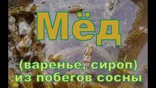 Сосновый Мёд (варенье, сироп) из побегов сосны