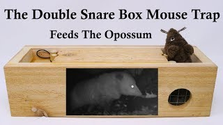 The Double Snare Box Mouse Trap - Feeding The Opossum. Mousetrap Monday