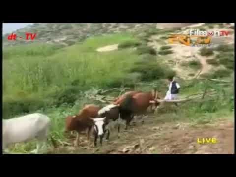Eritrean bilen music by Temesgen Michealu  merina.