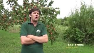 EkoFreez - biljni antifriz na kajsijama,  Pesti Istvan ,Titel 2017. Poljoprivreda - vocarstvo