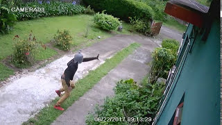 Thief in coopers hill - Jamaica