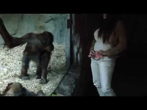 monkey jacking off utah seks flörtkaynak: youtube · süre: 23 saniye