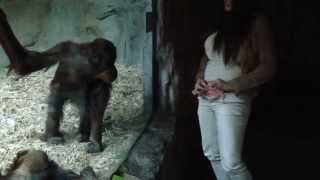 Repeat youtube video BEAUTIFUL GIRL STRIP FOR HORNY MONKEY!! jealousy monkey