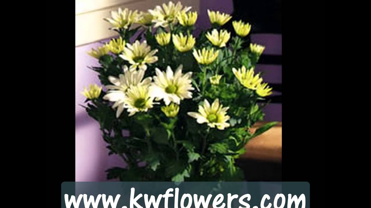 Kitchener Waterloo Flowers -- Free local delivery florist - YouTube