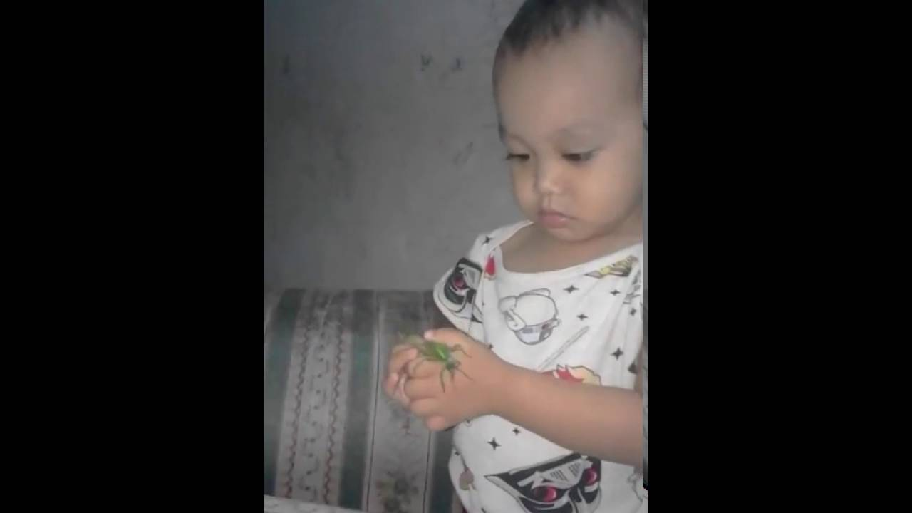 Video Bayi Lucu Community Google