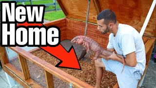 we-built-this-for-my-red-lizard-on-the-ranch