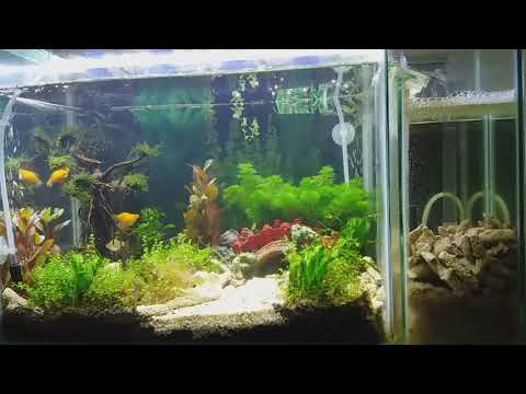 aquarium-for-relaxation-|-aquarium-mini-for-kids-|-aquascape-|-720p