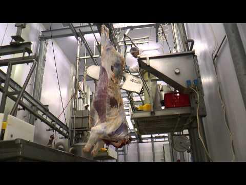 Prezentare Abator Carne De Vita