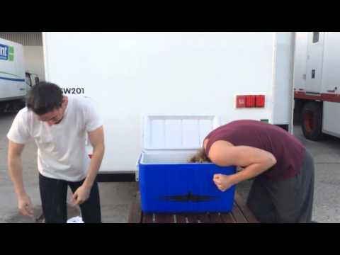 Toby & Torrance do the Ice Bucket Challenge.