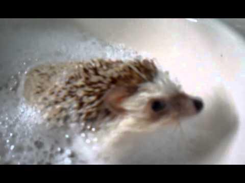Hedgehog Bubble Bath! - YouTube -  9.7KB