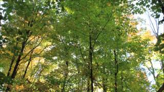 Nature Sounds: Walking Through Leaves in the Fall