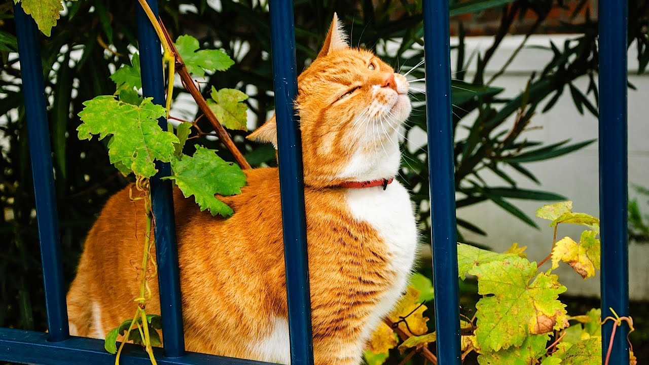 Why Cats Rub Their Heads On Things Cat Care Crazy Cat