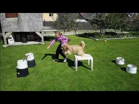 our dog:tricks