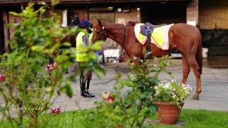 Stable life: Home at the yard