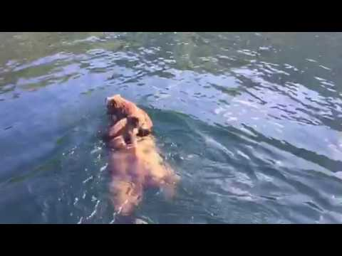 Amazing Video of Grizzly Bears - Outdoor Channel