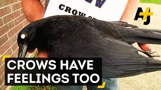 Crows Hold Funerals And Remember Enemies