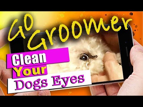 How to Clean your Dogs Eyes