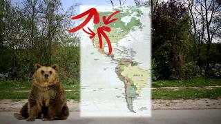 Comment réagir face à un ours en randonnée?