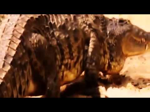National Geographic | Wild Animal Documentary - Amazing Africa : Nigeria