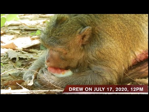 the-situation-of-drew-on-july-17,-2020,-12:00-pm
