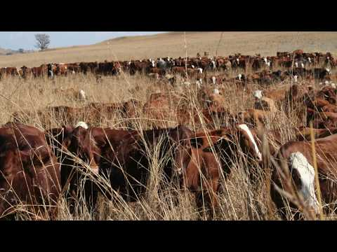 Ranching and Farming - MOB Grazing - One Day Grazing