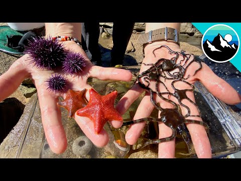 Make a Tide Pool Aquarium for #CampYouTube! #WithMe смотреть видео онлайн