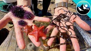 Make a Tide Pool Aquarium for #CampYouTube! #WithMe
