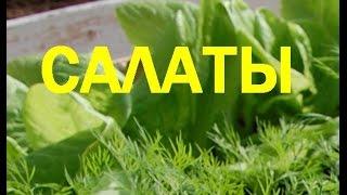 Салат из курицы с овощами  Пошаговый рецепт с фото