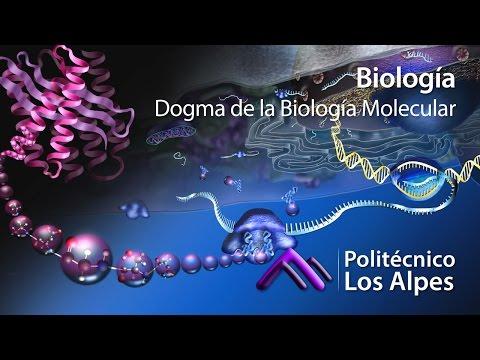 biología---dogma-de-la-biología-molecular