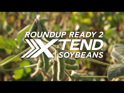 Asgrow® Roundup Ready 2 Xtend® System