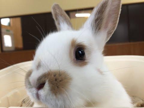 外うさぎを探しに【Vol. 2】Finding Rabbits ブロークン兎の赤ちゃん