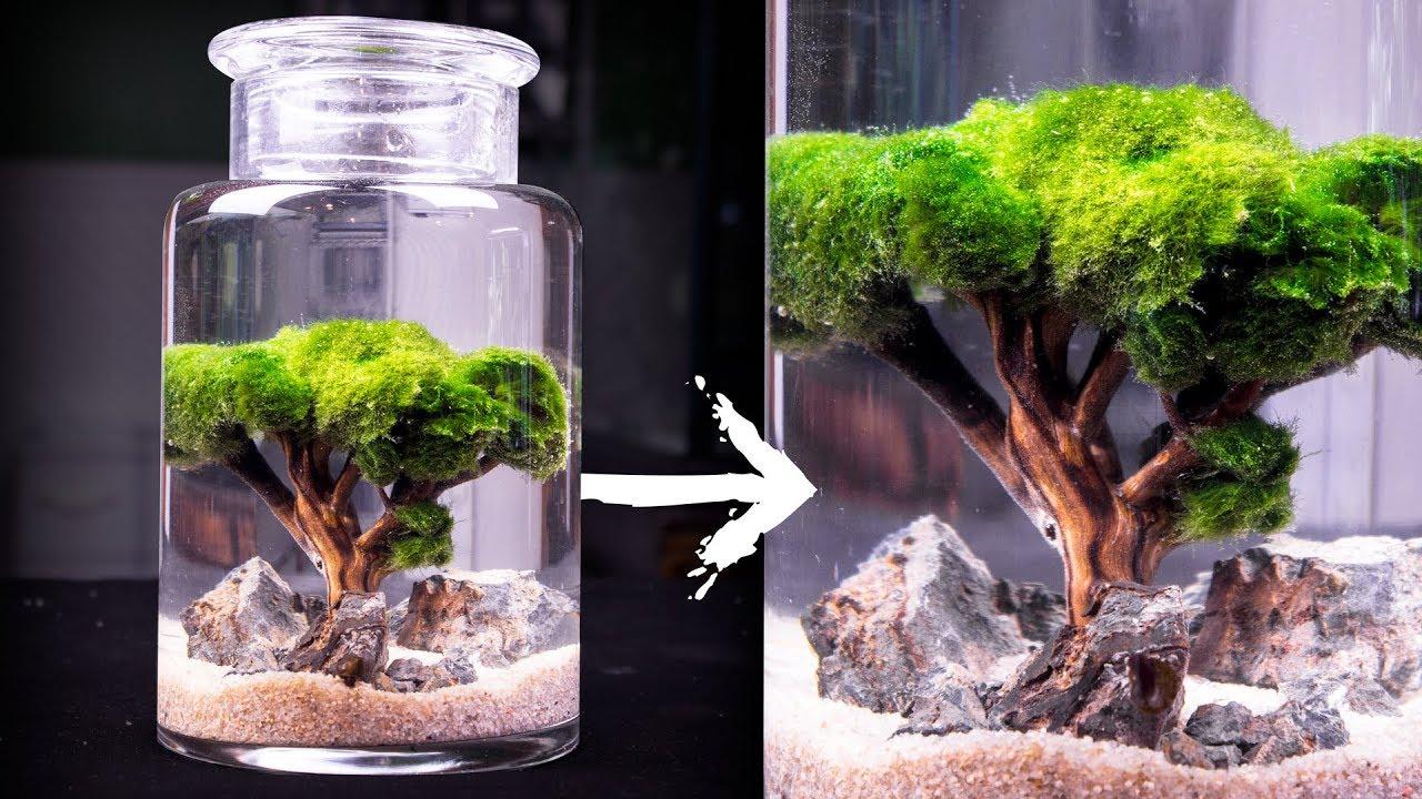 Moss Ball Tree Ecosphere Youtube
