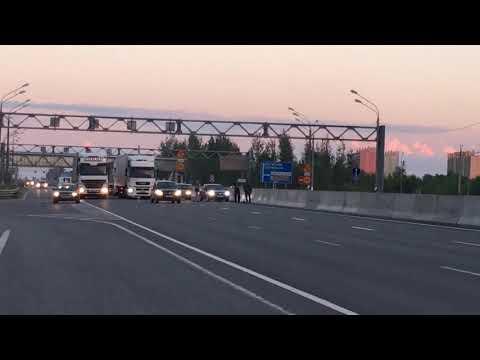 видео: В Твери ради спасения утиной семьи перекрыли трассу М-10