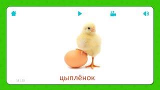 Цыплёнок - Карточки Для Детей - Домашние Животные - Карточки Домана