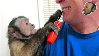 Capuchin Monkey Dentist
