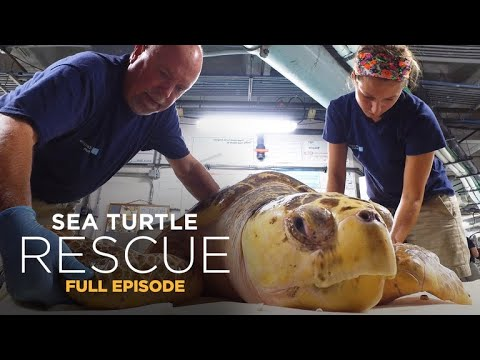 Sea Turtle Rescue 106: The Fight For Sight
