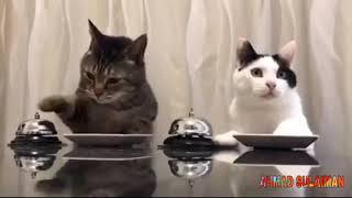 5 menit tingkah laku lucu kucing terbaru 2019 #1