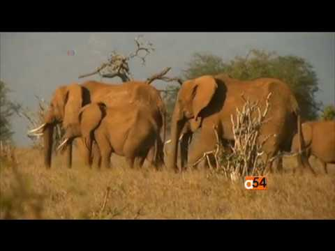 United Nations' World Wildlife Day