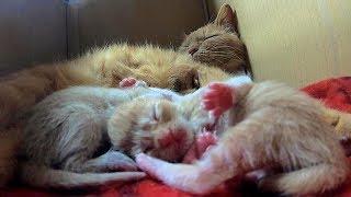 産まれて半日の子猫は幸せいっぱいでつい寝ピクをしちゃう! thumbnail