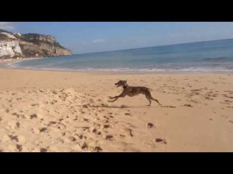 The Fastest Dog in the World