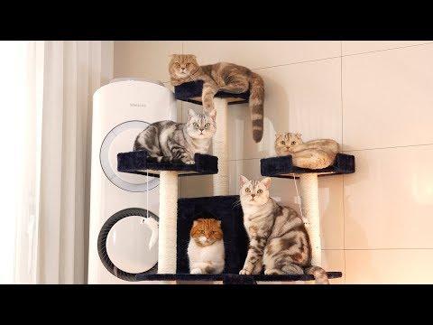 새로운 캣타워의 왕좌는 어떤 고양이가 차지할까? 꿀잼 캣타워 조립기