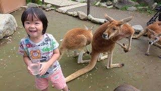 おでかけ 動物に餌あげしたよ!動物園 ノースサファリサッポロ レオ★スマイル thumbnail